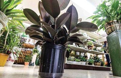 Indoor plants provide more than just decor | Human Interests