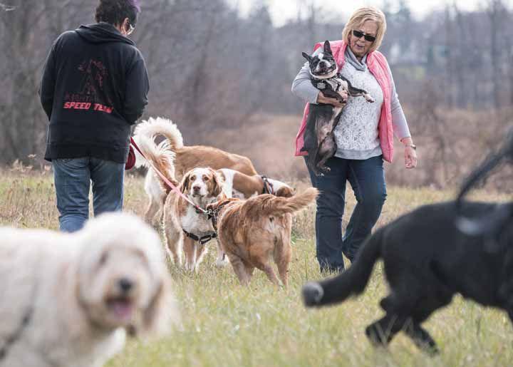 Dog Park Fenton Mi