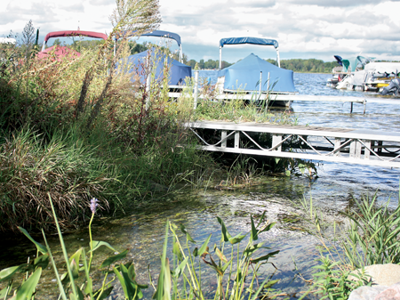 Purple loosestrife, lily pads and millfoil are some weeds that will be addressed on several lakes in Fenton Township.