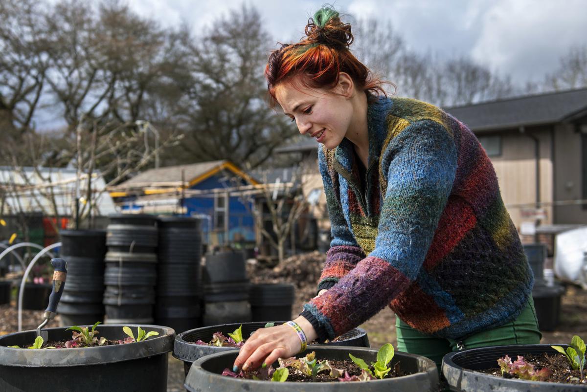 Lettuce + kale planting