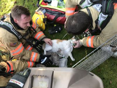 Firefighters resuscitate cats