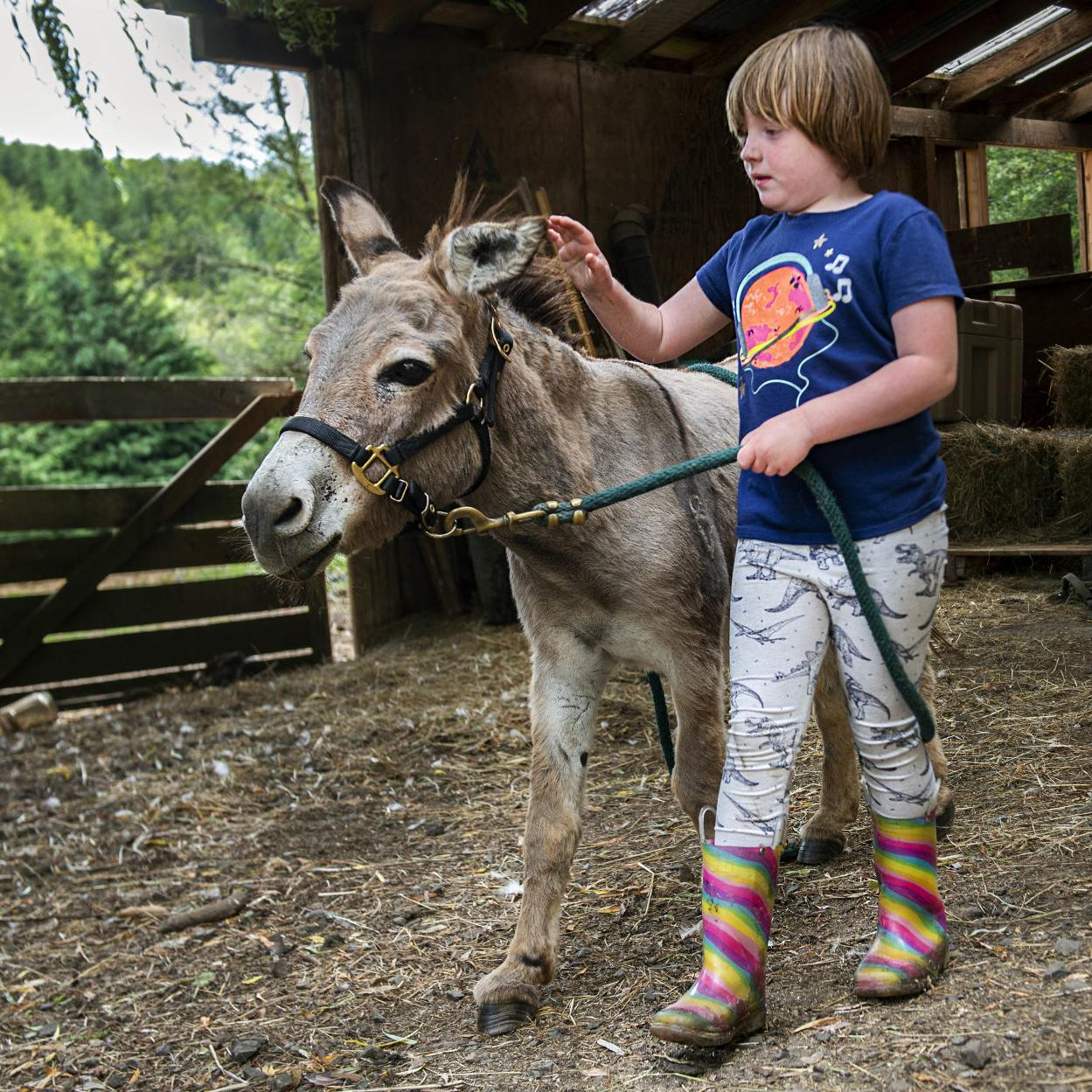 Family adopts rescued donkeys for autistic daughter from CR