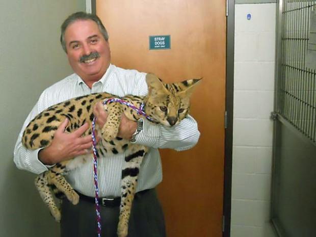 Savannah Cat Pet Price