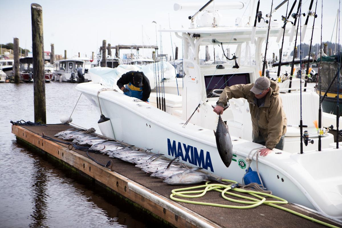 Tuna bonanza: Best albacore sports fishing in years off