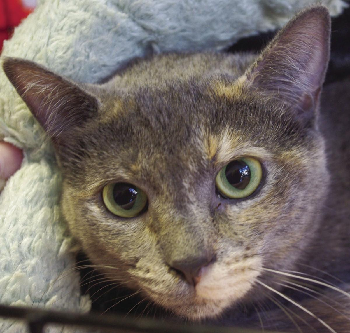 Pets of the Week: Janet