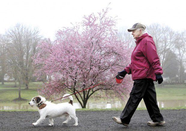 Longview council approves leash law