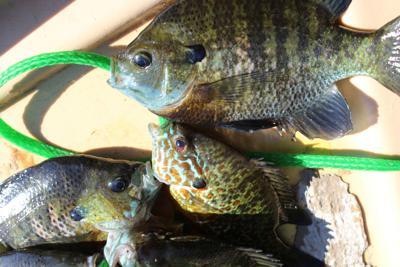 07-19 B1 Panfish