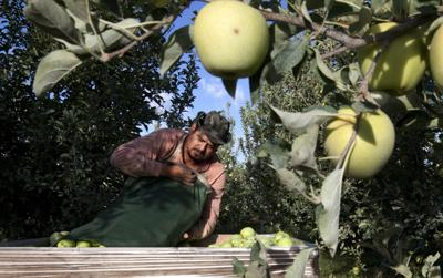 Yakima Valley apple industry relieved to see end to Mexican