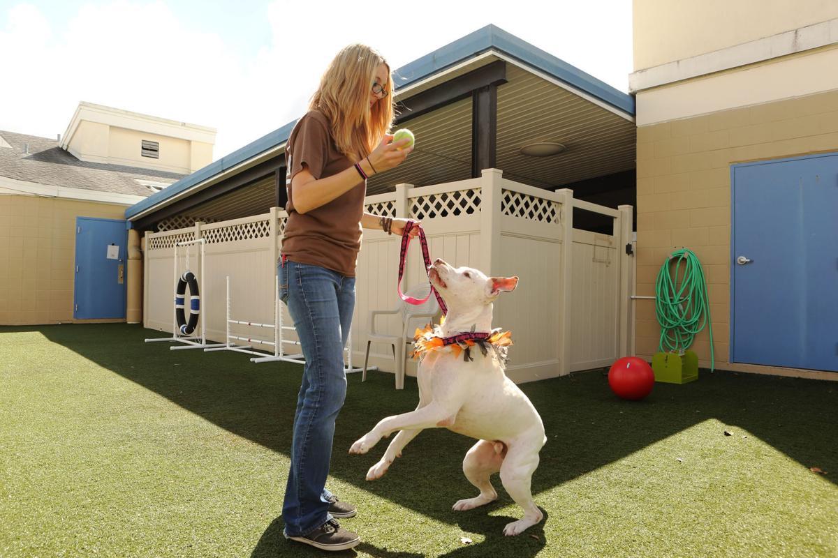 Pet adoption tactics 01
