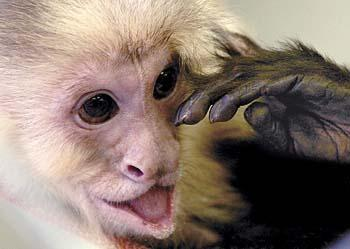 Longview Couple Rescues Unwanted And Abused Monkeys