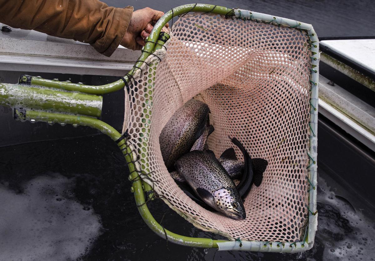 Net full o' fish