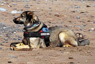 _service-dog-5420330_1920_CMYK.jpg