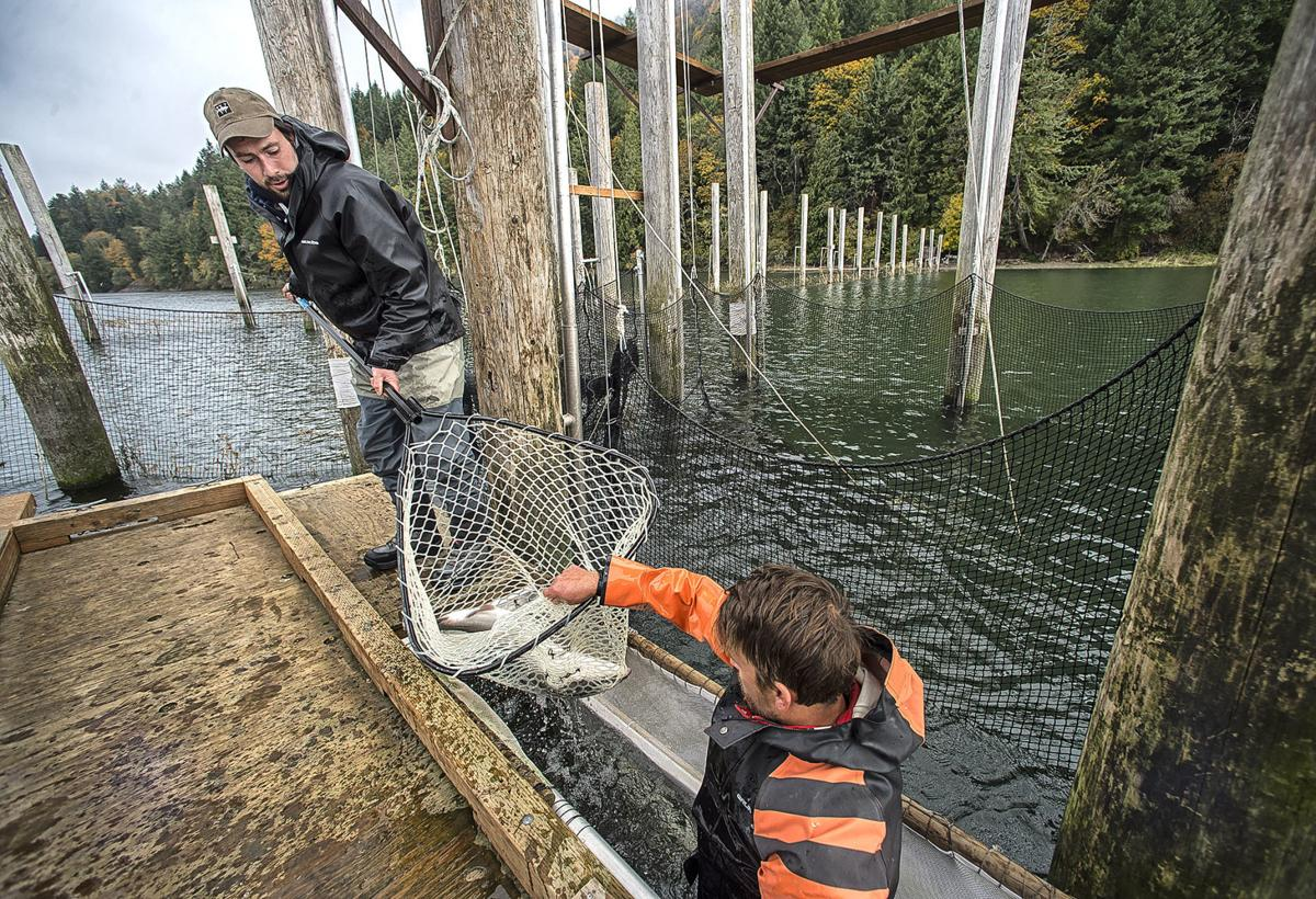 Cathlamet fish trap