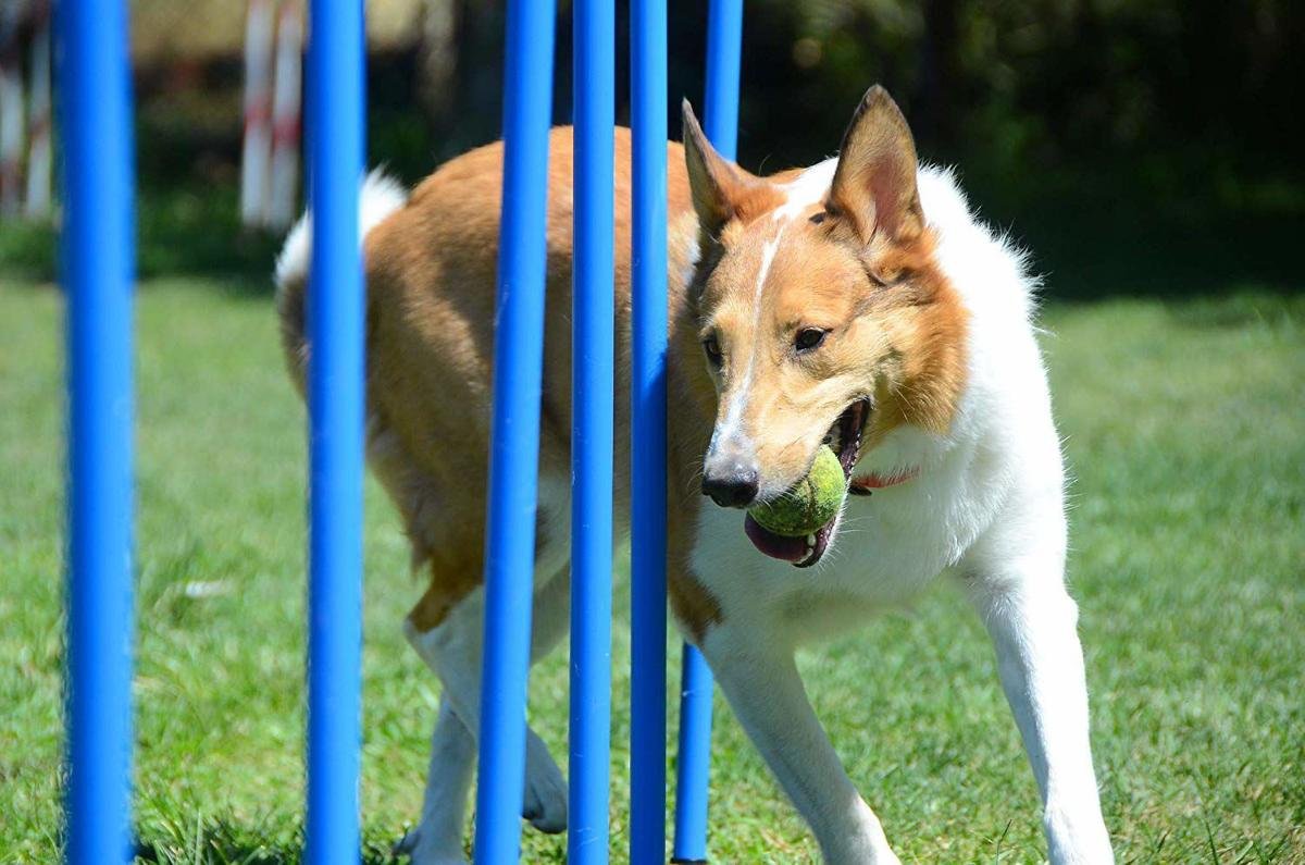 Here's how to build a backyard agility course for your ...