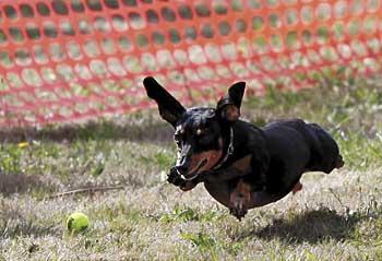 Pet psychic a hit (and miss) at Dogapalooza