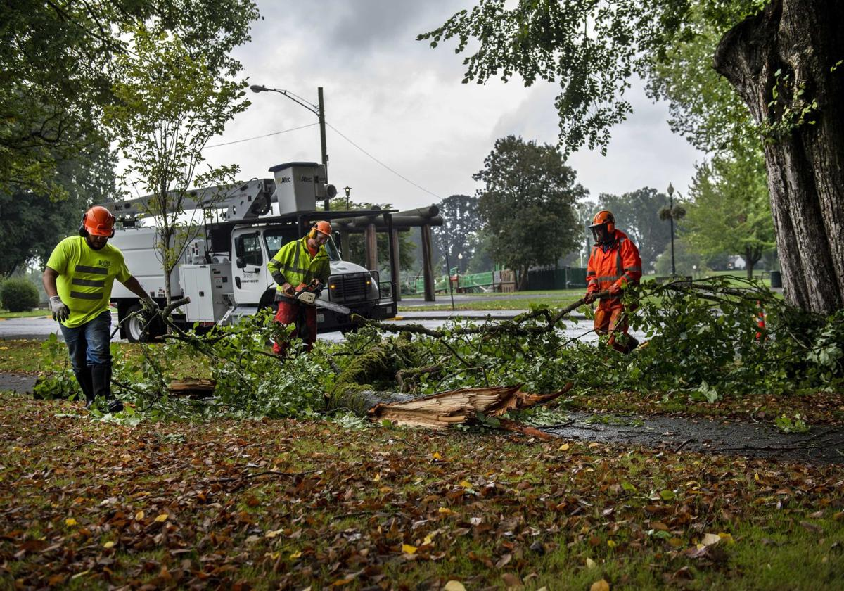 Longview parks crew removes fallen tree limbs