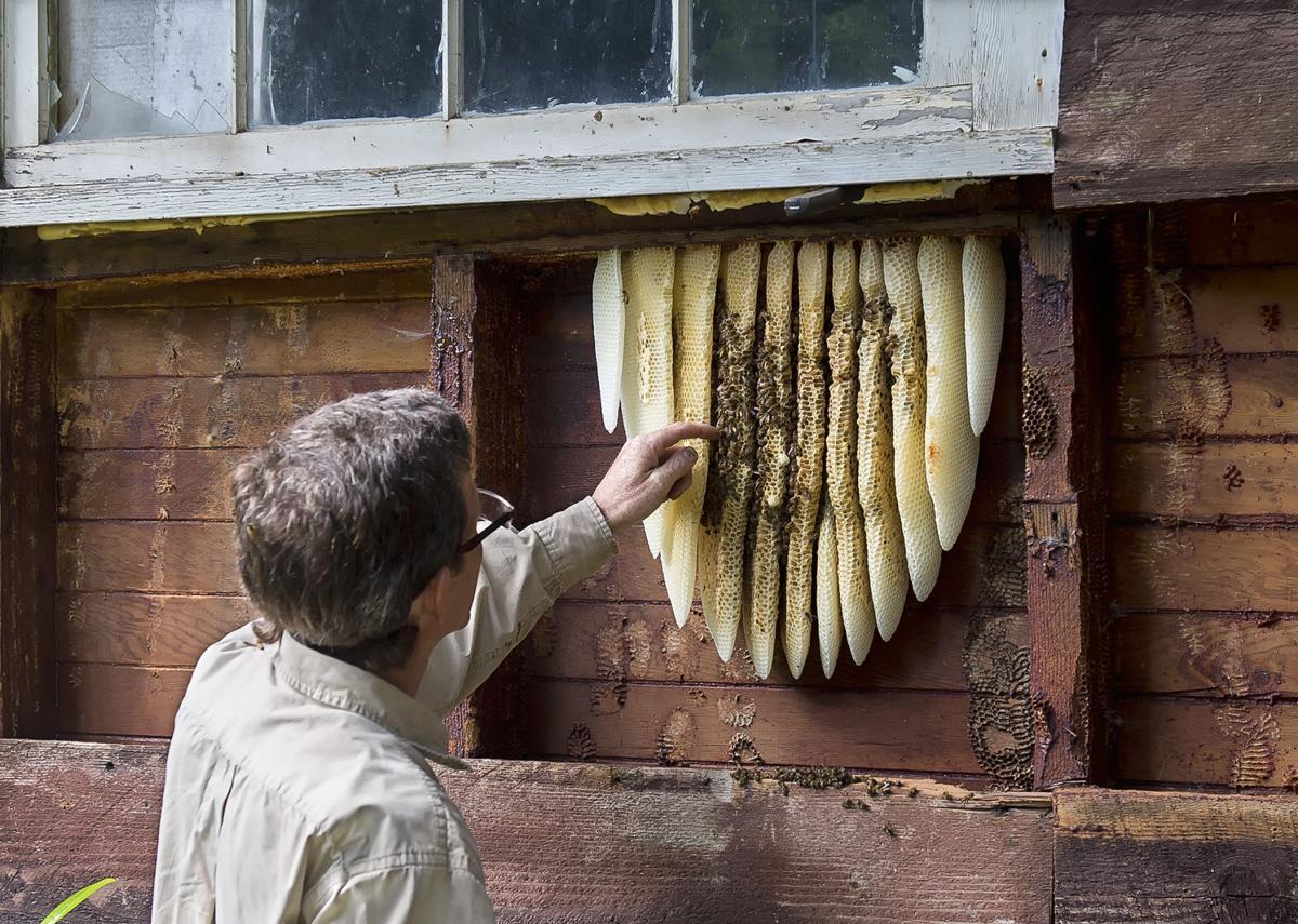 Bees jump (copy)