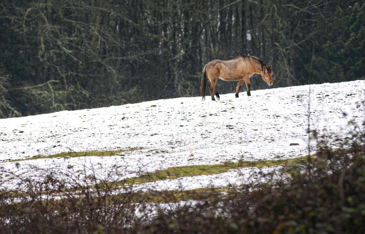 A snowy pasture