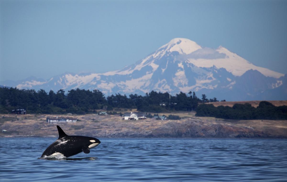 US-NEWS-ENV-ORCAS-6-SE