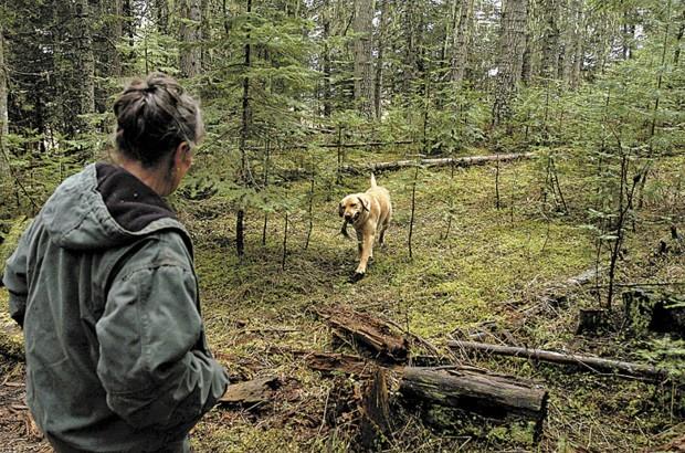 Idaho Women Train Labrador Retrievers To Hunt Shed Antlers
