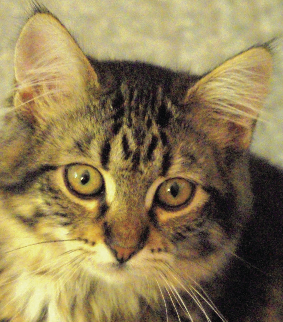 Pets of the Week: Tigger