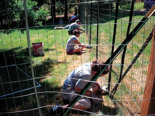 Fences for Fido