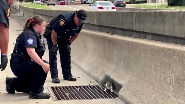 Watch Now: Police officers rescue kitten from Texas freeway