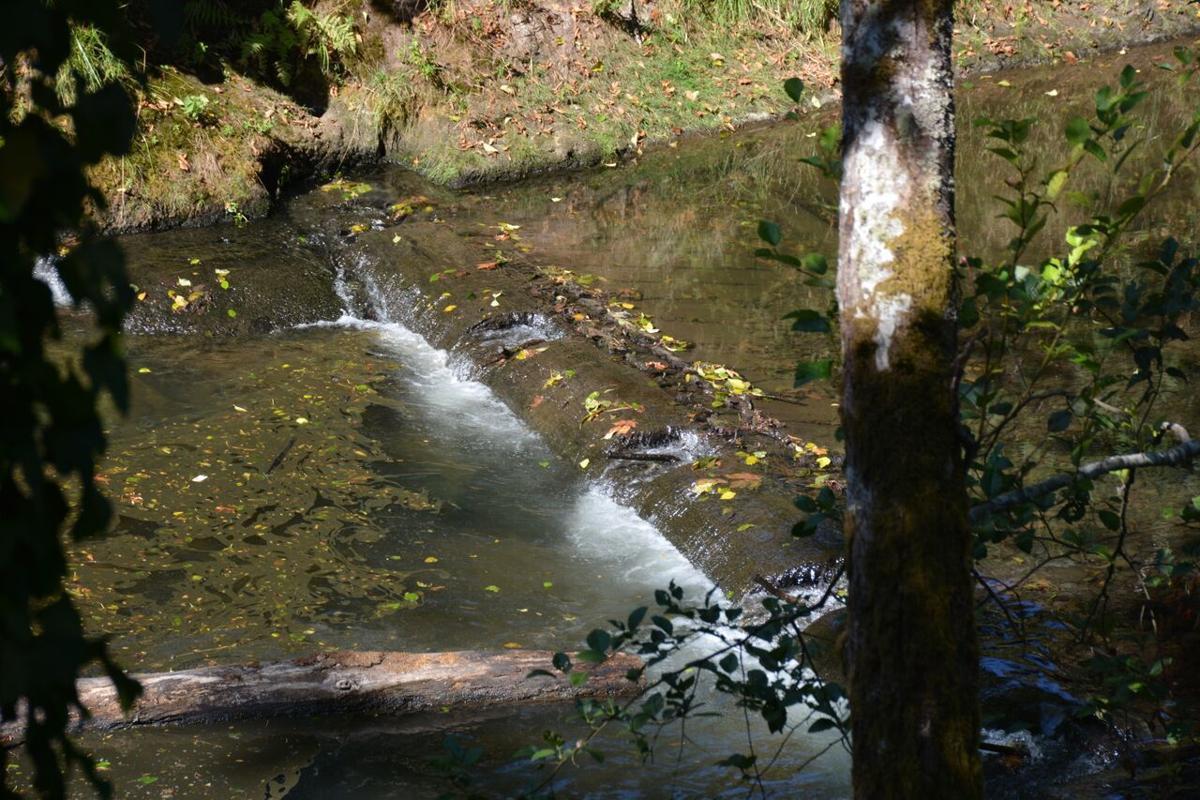 Olequa Creek