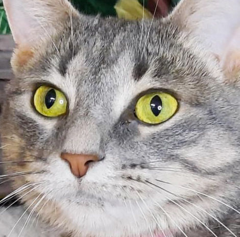 Three cats featured at shelter