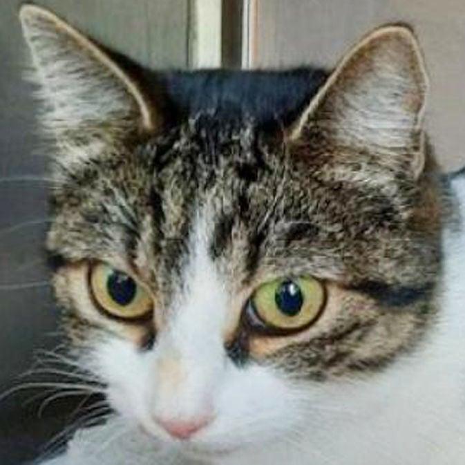Three adoptable cats need a loving home