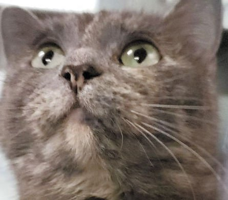 Cat duo needs forever home