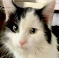 Feline trio needs forever home