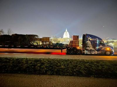 Capitol tree