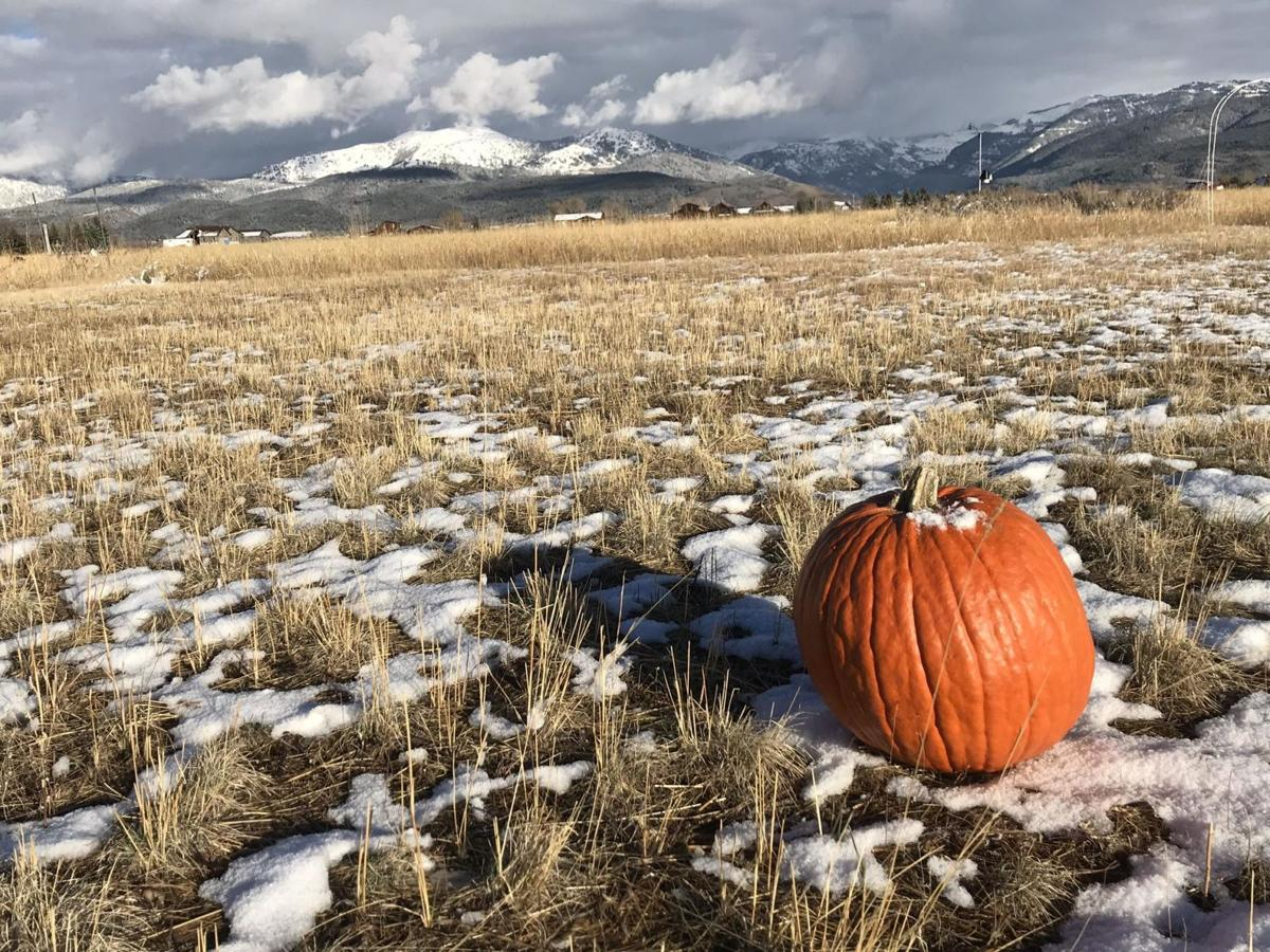 pumpkin snow