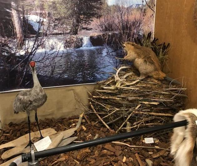 Crane & Beaver Display