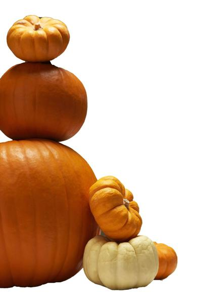 Pumpkins, gourds, fall, autumn, halloween, thanksgiving.psd