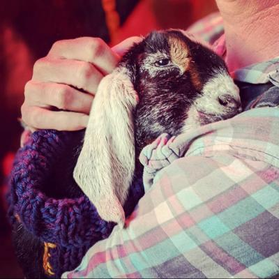 baby goat 2021