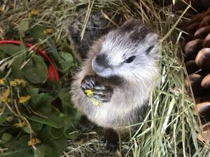 Springtime brings baby wildlife