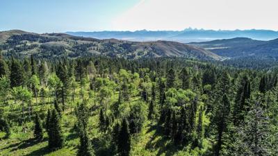 Teton Timbers Aerial-65.jpg