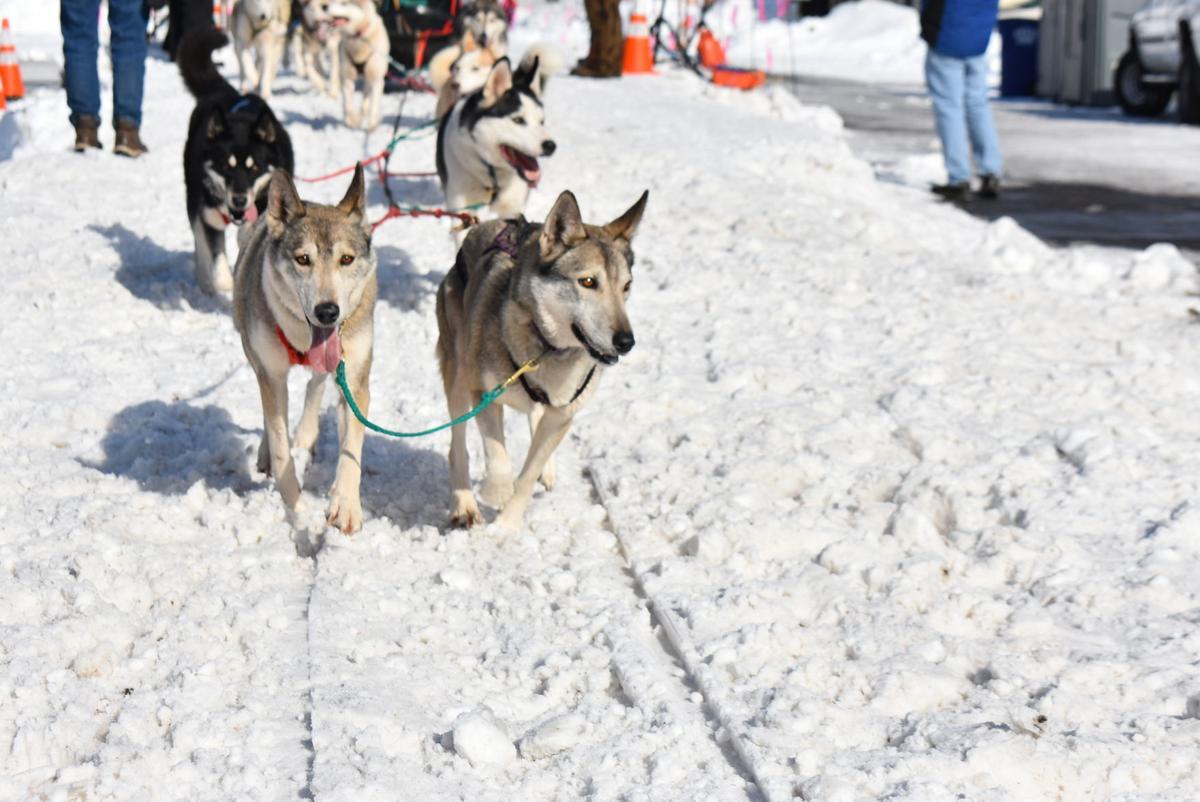 American Dog Derby kicks off on Friday