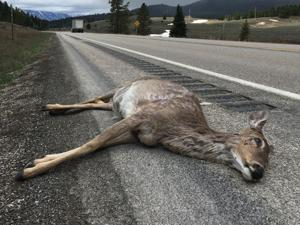 Rules of the roadkill