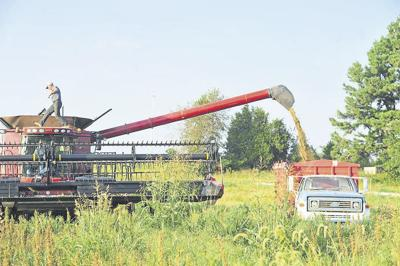 Finding the real value of hemp in Kentucky | Local News
