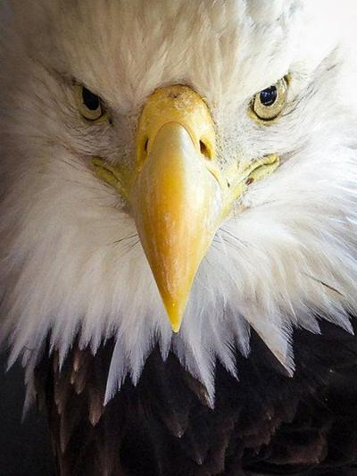 Eagle watch event set for Saturday