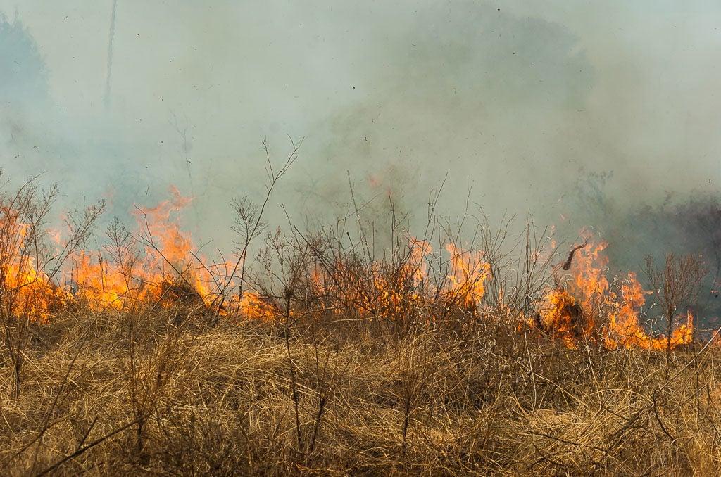 Fire reaches dry grass