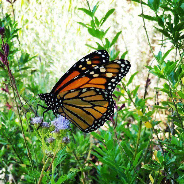 OKC Zoo to host Monarch Madness Fun Run Saturday
