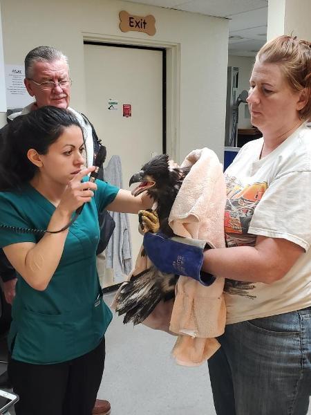 Eagle Rescue pic 101.jpg