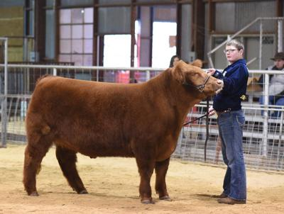 Stratford 4-H and FFA members compete at county livestock show