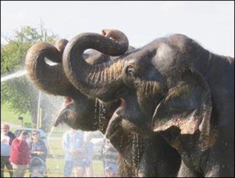 Elephant bath, circus coming to Ada today