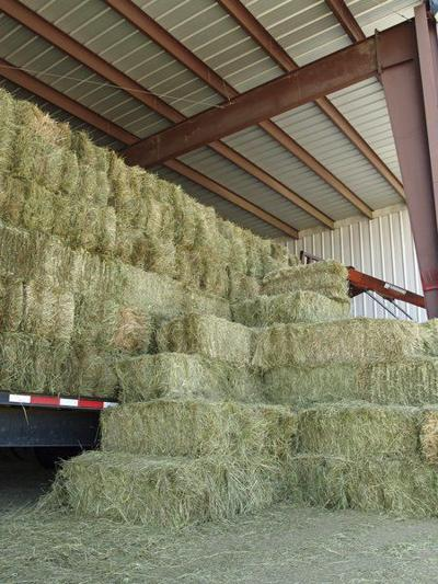 Consider stockpiling forage for winter use