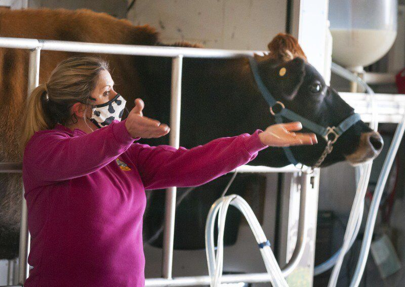 Willard School hosts mobile dairy